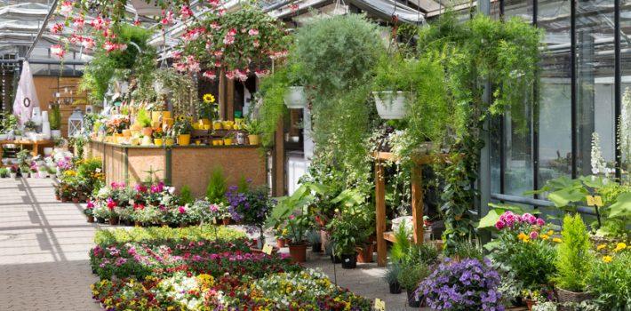 Ou acheter des plantes aromatiques ?